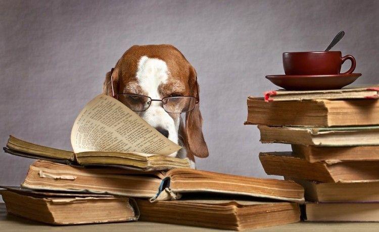 Img perros inteligentes 3 art