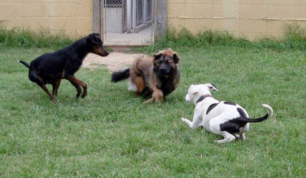 Img perros jugandonuestra