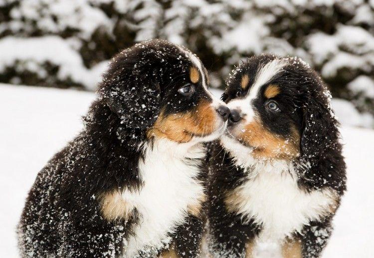 Img perros jugar nieve art