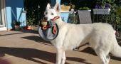 Img perros juguetes ada frisbee