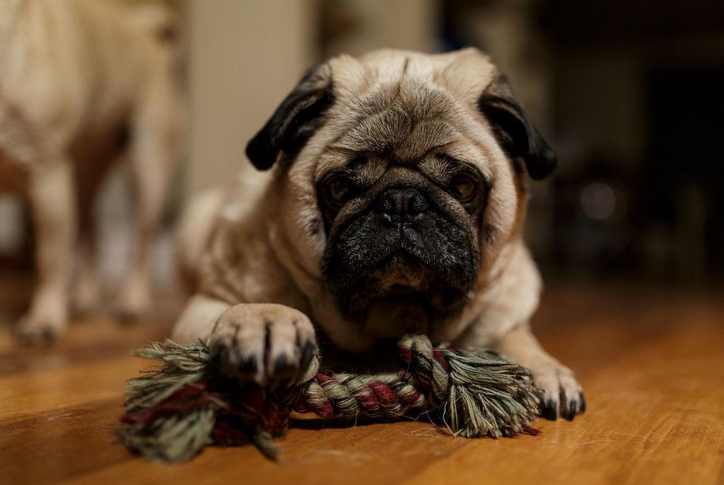 Img perros juguetes caseros telas