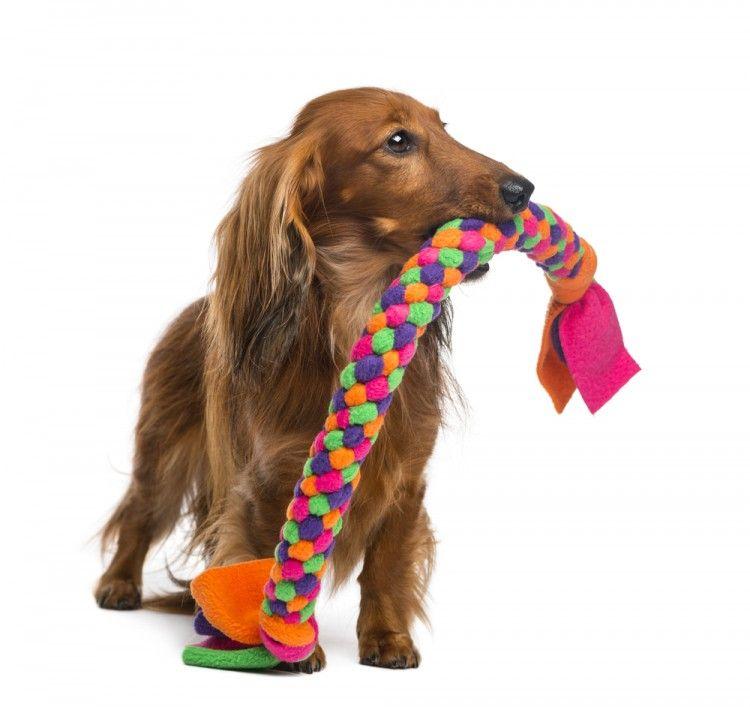 Img perros juguetes favoritos 2 art