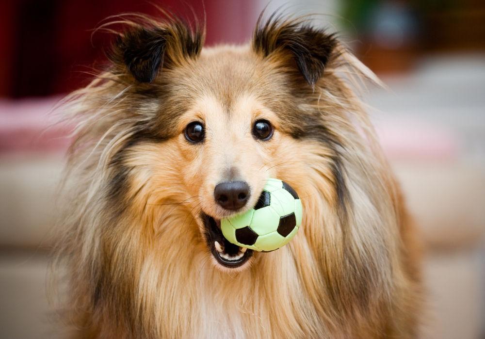 img_perros juguetes favoritos