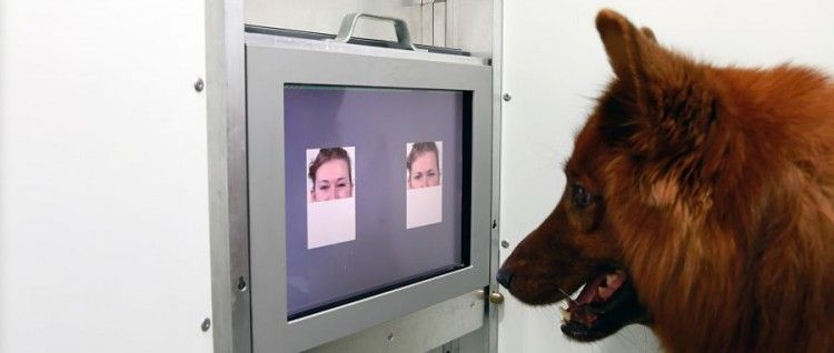 Img perros lab art