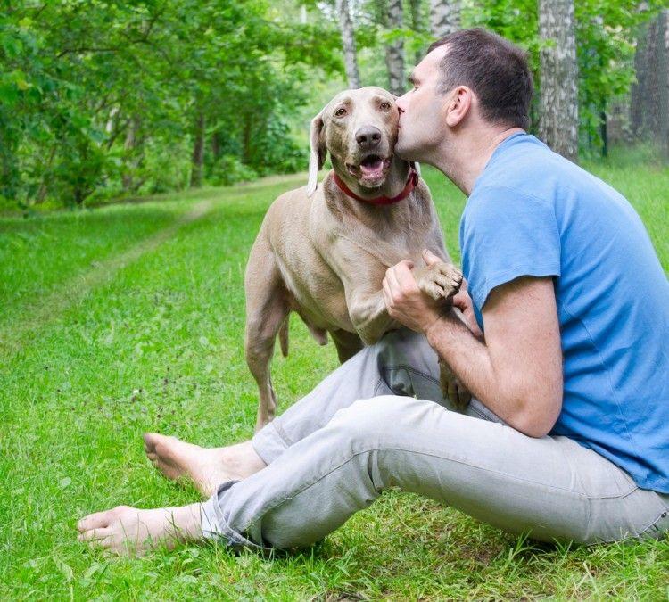 Img perros leishmaniasis proteger art