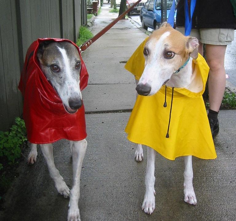Img perros lluvia impermeable art