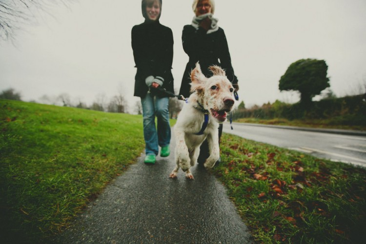 Img perros lluvia leishmania art