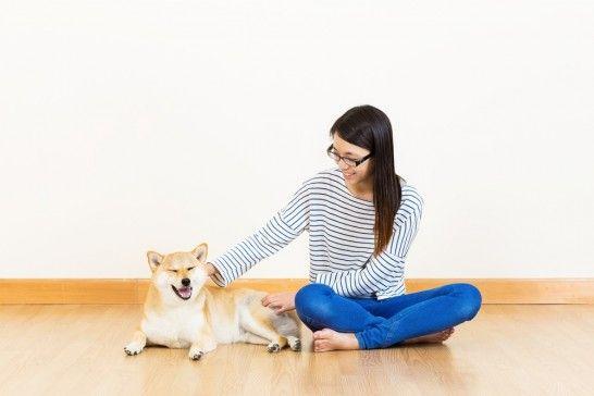 Img perros masajes listg