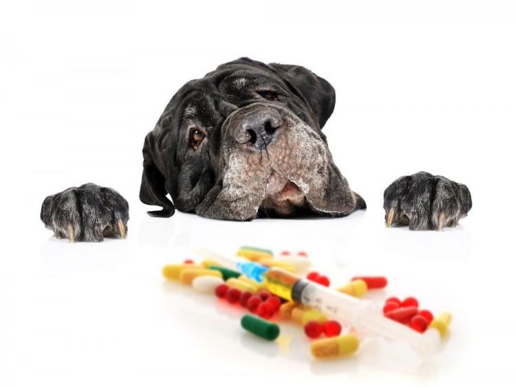 Img perros medicamentos garrapatas art