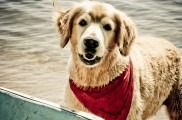 Img perros memoria educar mascotas animales adiestrar inteligencia listado