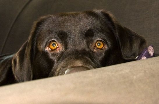 Img perros miedo listg