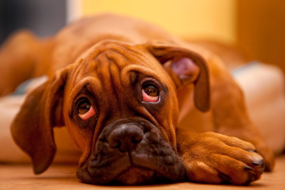 img_perros miedo soledad solos4
