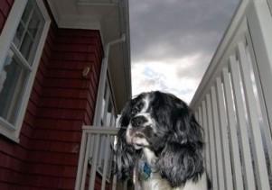 Img perros miedos petardos fuegos artificiales tormentas mascotas animales art