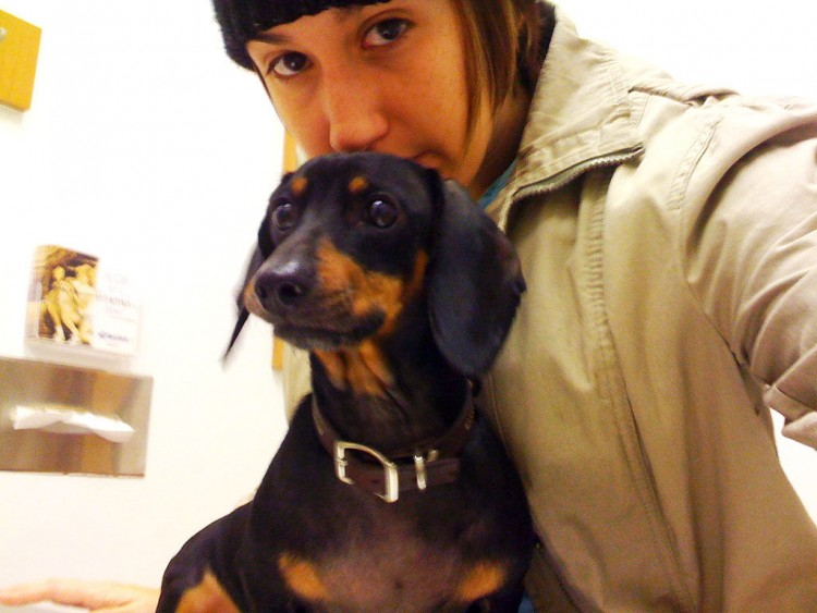 Img perros miedos veterinarioss art