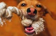 Img perros mordedores caseros fabricar gratis listado