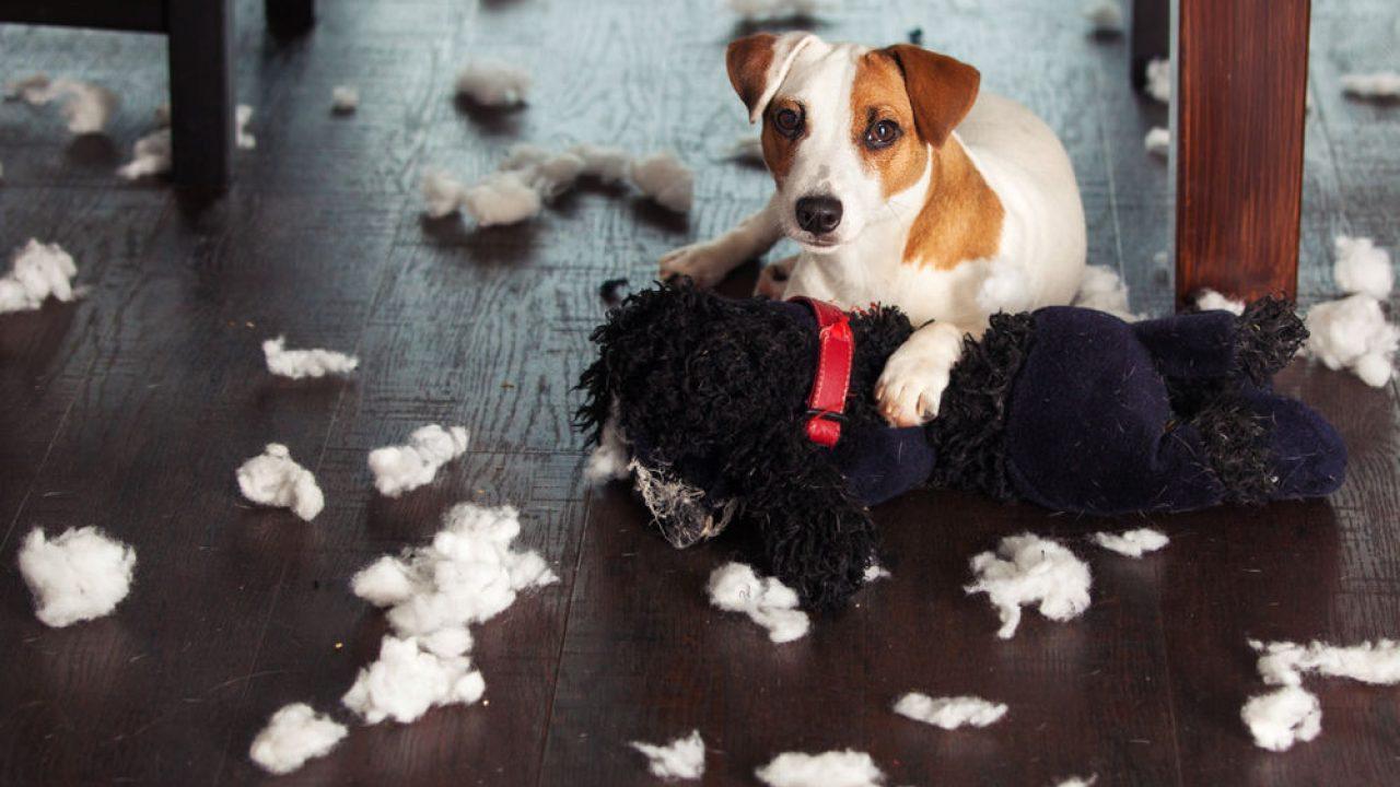 Mi Perro Muerde Los Muebles Cómo Usar Los Repelentes De Sabores Consumer