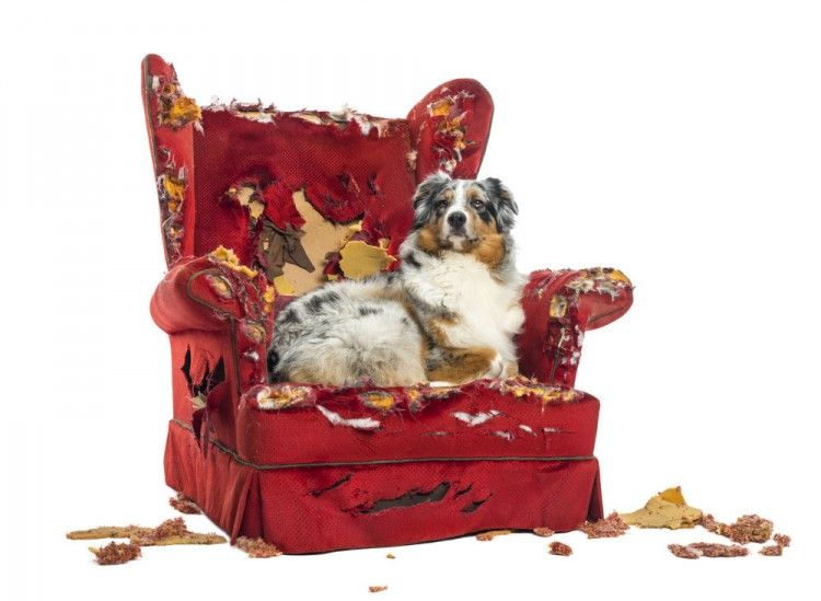 Img perros muerden muebles productos repelentes3 art