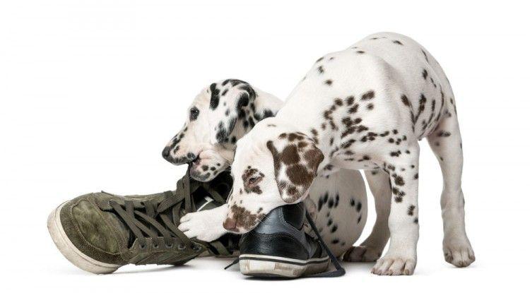 Img perros muerden muebles productos repelentes4 art