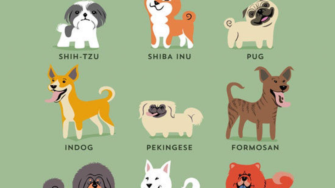 Cuántas Razas De Perros Hay En El Mundo Consumer