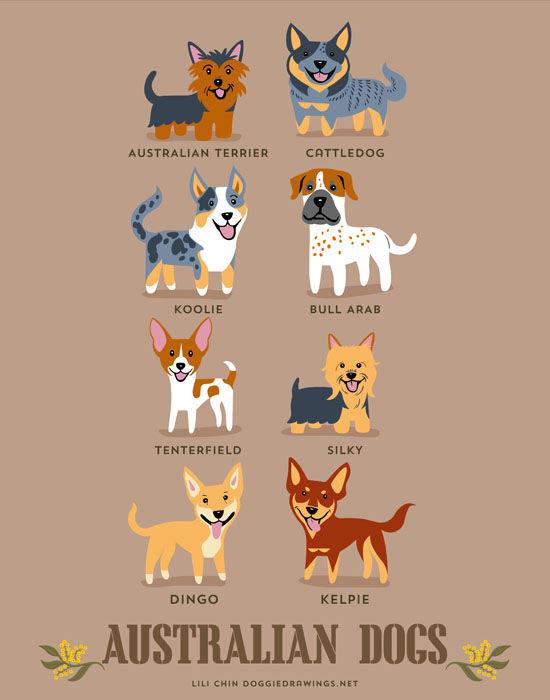 Img perros mundo