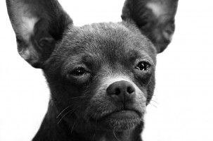 Img perros muy delgados anorexias alimentos mascotas animales consejos art