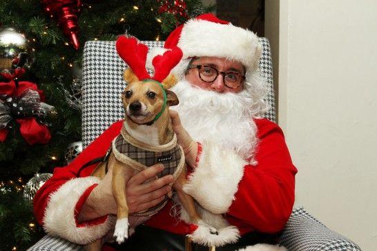 Img perros navidad regalos listg