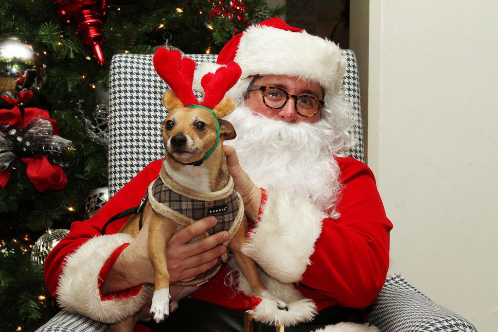 Img perros navidad regalos