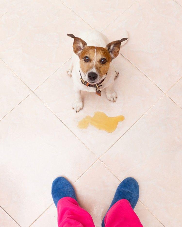 Img perros necesidades casa trucos1 art