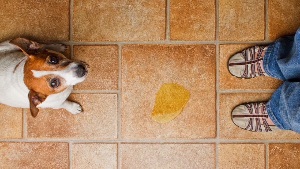 6 Trucos Para Que El Perro No Haga Sus Necesidades En Casa Consumer