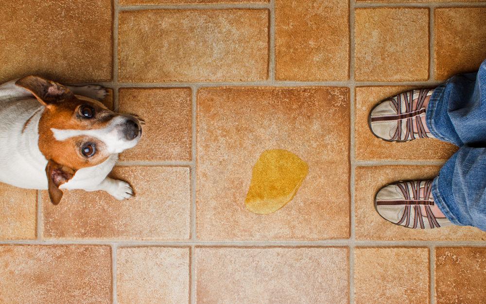 Como limpiar pis de perro del sofa