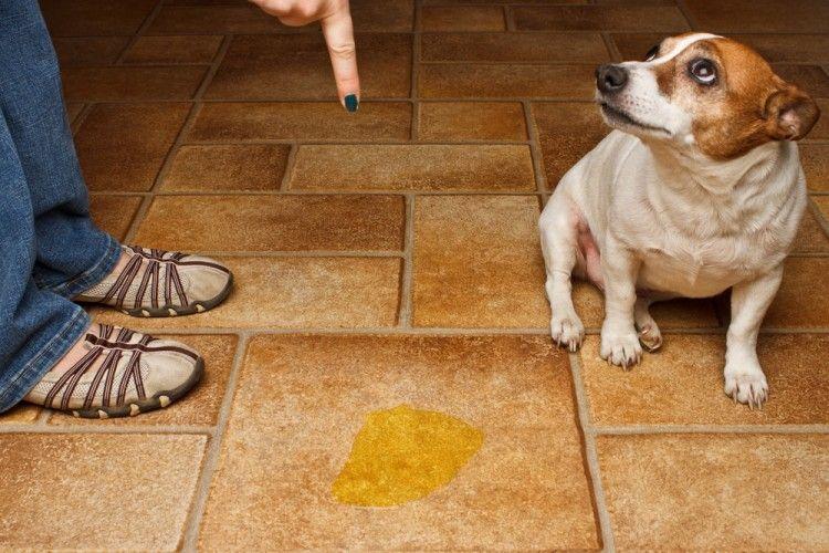 Img perros necesidades casa trucos3 art