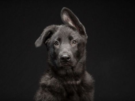 Img perros negross 0 art
