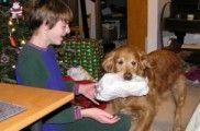 img_perros ninos problemas conducta ladran visitas navidad listado