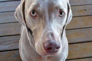 Img perros no come alimentacion alimentar animales delgados mascotas art