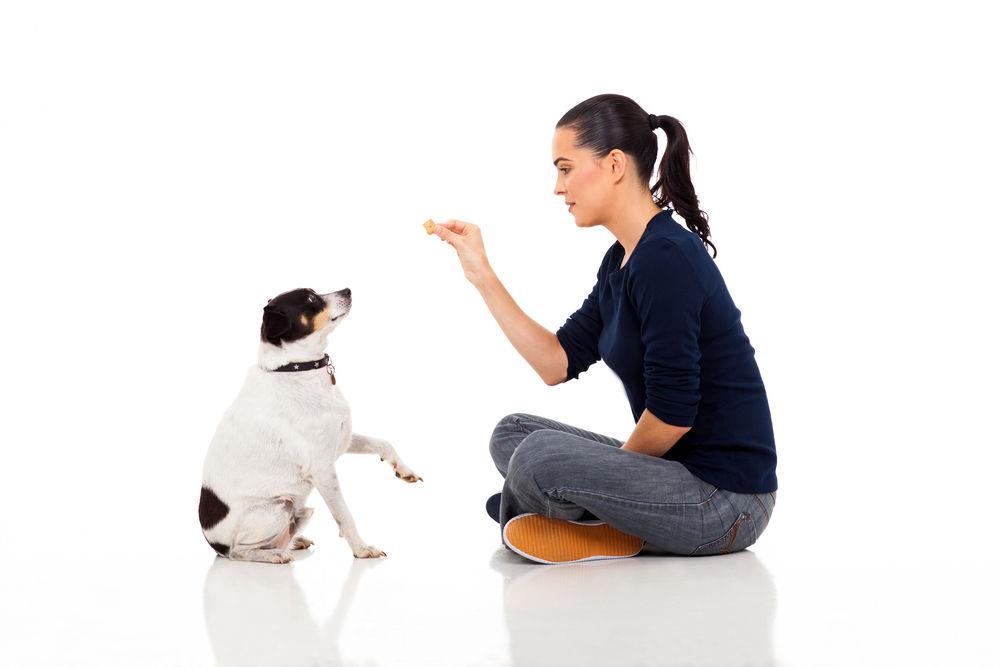 Img perros nueces cacahuetes peligros