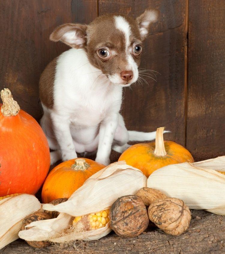 Img perros nueces cacahuetes peligros2 art