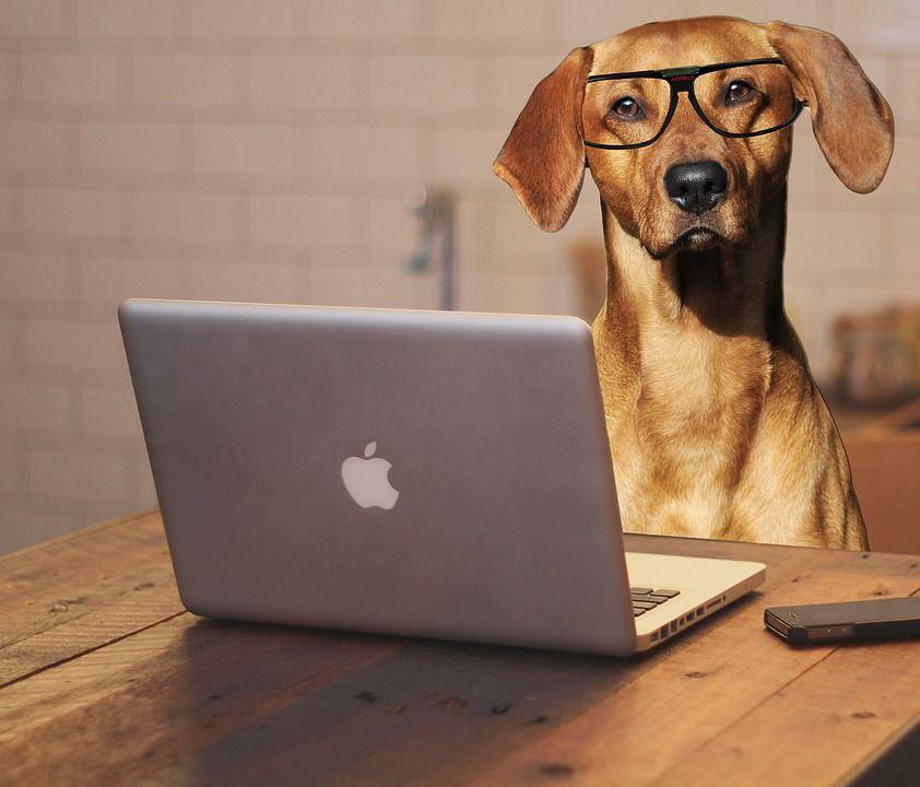 Img perros oficina beneficios