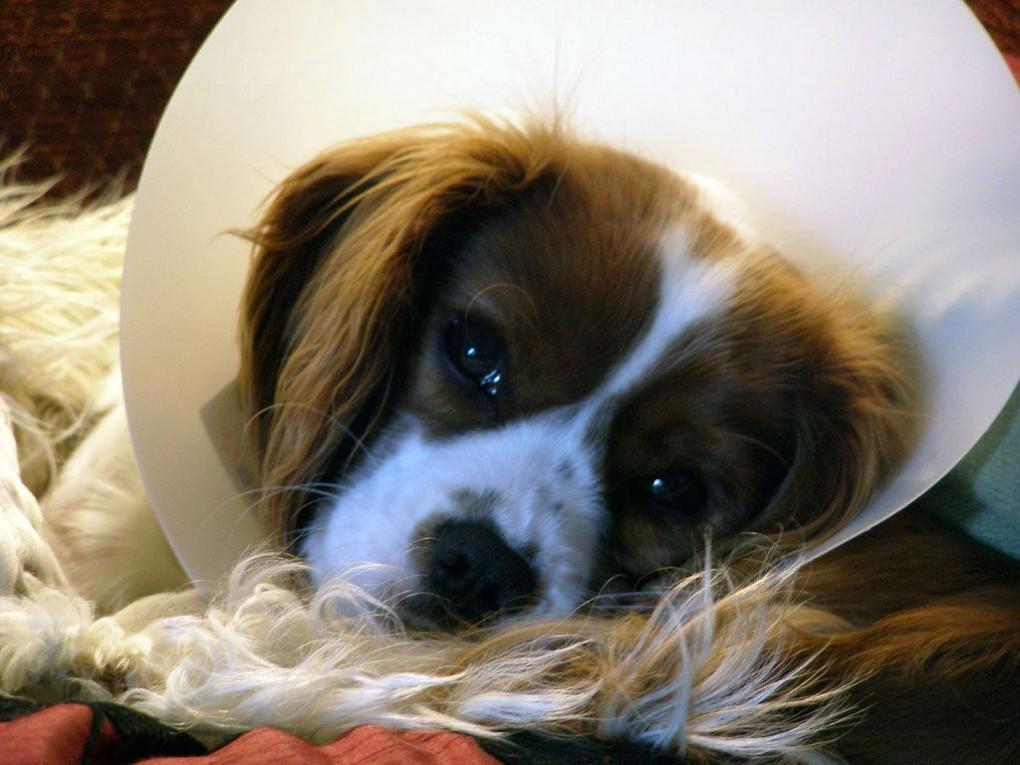 Img perros operaciones cuidados