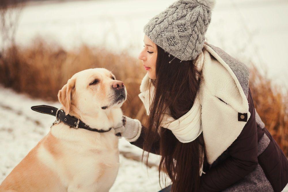 Img perros pasear invierno nieve