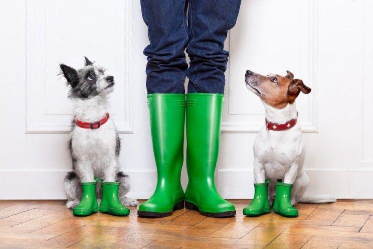 Img perros pasear lluvia trucos art