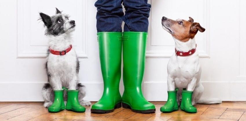 img_perros pasear lluvia trucos portadas