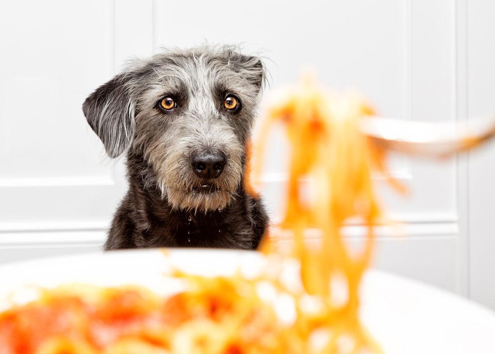 Img perros pasta alimentos