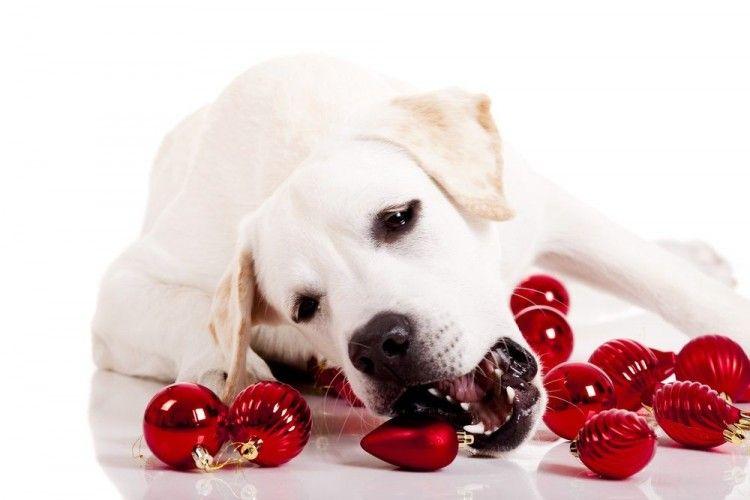 Img perros peligros navidad art