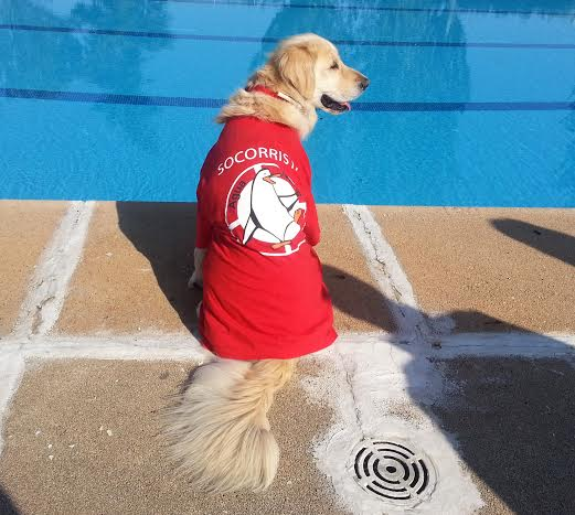 img_perros piscinas