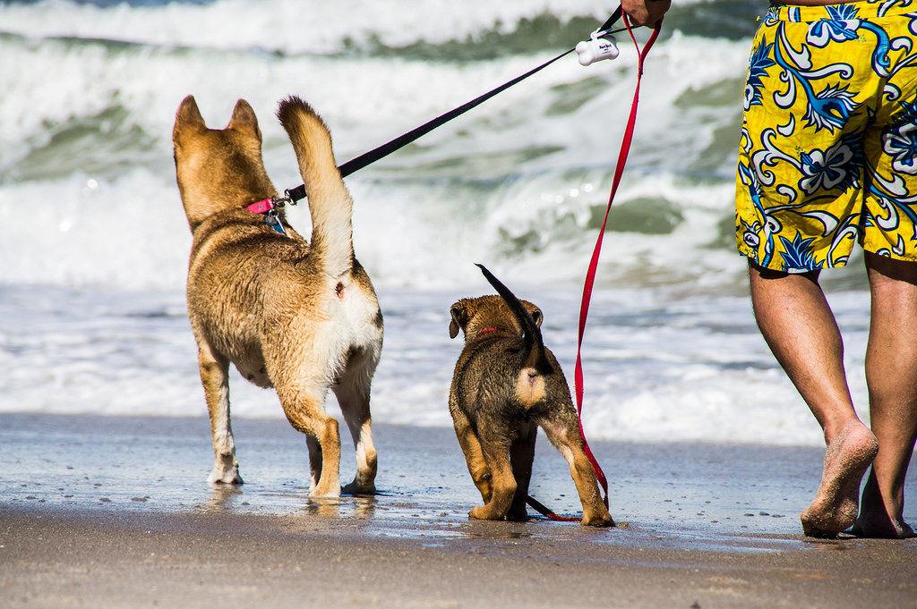 img_perros playas mascotas