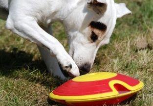 Img perros puzles rompecabezas juegos mascotas nina ottonson juguetes animales diversion art