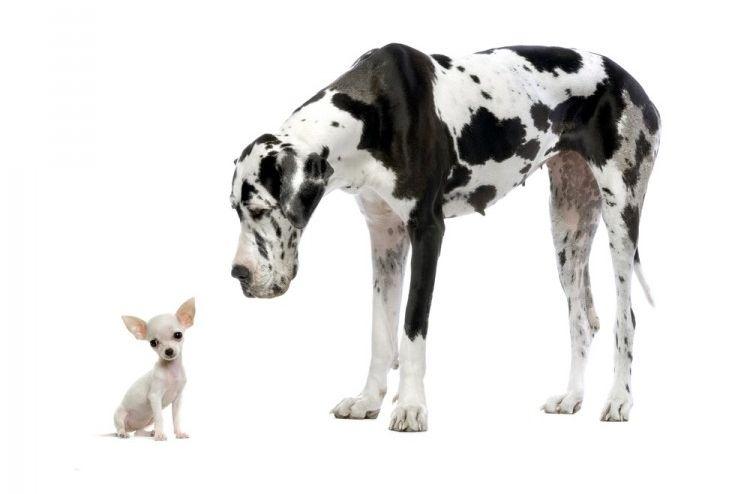 Img perros razas 2 art