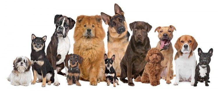 Img perros razas art