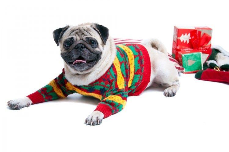 Img perros regalos navidad ideas art