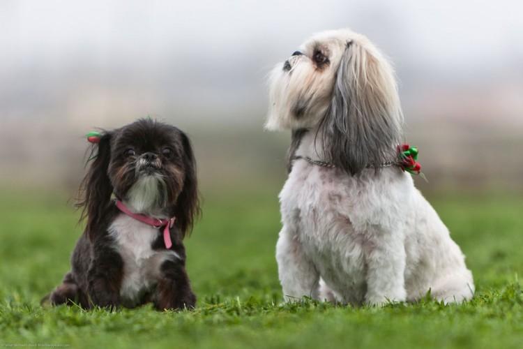 Img perros reproduccion sexualidad art